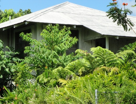 Hawaii Garden overgrowth